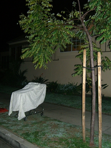 Ghostcart 001