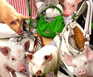 Piggie8