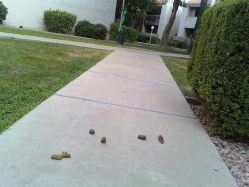 Sidewalkpoop