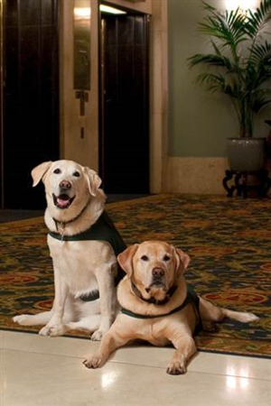 Hoteldogs