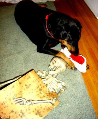 Return hound 2