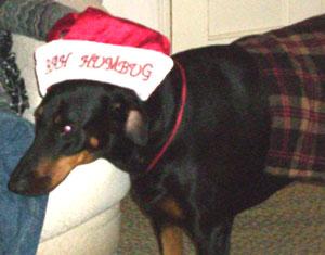 Return hound 3