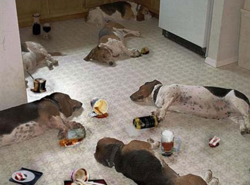 Animaldrinkingparty_2